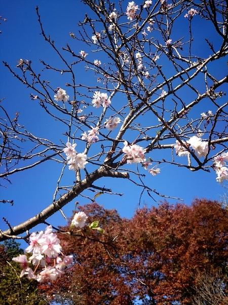 16-11-03-11-17-30-564_photo_r.jpg