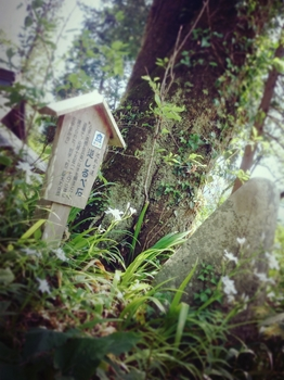 2015-04-28-14-37-34_deco.jpg